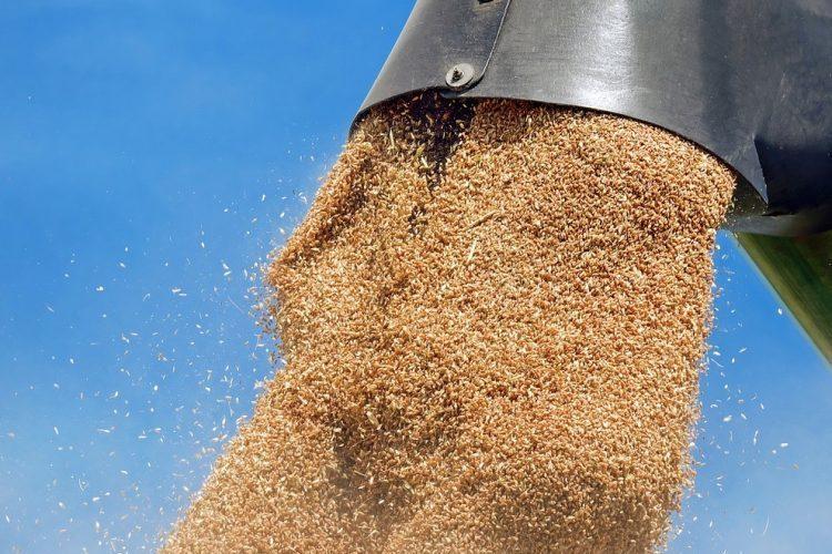 Les pays d'Afrique du Nord ont encore d'importants besoins en blé cette année