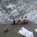 43 migrants décédés dans un naufrage près de la Tunisie